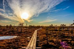 Wooden footpath in swamp with beautiful evening sun light at sunset and autumn colored flora of winter bog, Northern Europe nature. Trail along the wooden royalty free stock photo