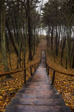 Wooden forest staircase in autumn Royalty Free Stock Image