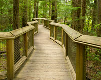 Wooden forest walkway Royalty Free Stock Images