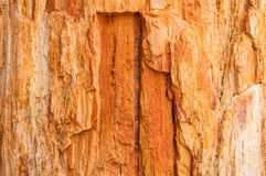 Wooden fossil surface texture. The wooden fossil surface texture Stock Image