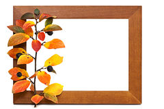 Wooden frame. Empty wooden frame with autumnal red-yellow branch Royalty Free Stock Photo