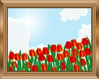 Wooden frame. With field of tulips Stock Images