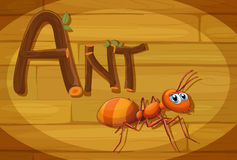 A wooden frame with an ant Stock Images