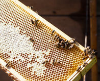 Wooden frame with bee honeycombs Royalty Free Stock Images