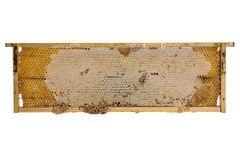 Wooden frame with bee honeycombs. On white background stock photography