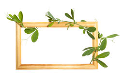 Wooden frame with bindweed Stock Photography