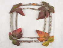Wooden frame with bramble leaves Stock Photography