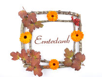 Wooden frame with calendula Stock Photography