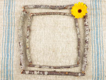 Wooden frame with calendula Royalty Free Stock Photo