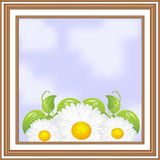 Wooden frame with daisies inside Stock Images