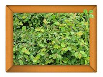 Wooden frame full of foliages. Royalty Free Stock Photography