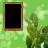 Wooden frame on a green Royalty Free Stock Photography