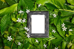 Wooden frame on green leaf. Layout wooden frame on green leaves and tropical white flower background, top view royalty free stock photo