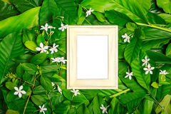 Wooden frame on green leaf. Layout wooden frame on green leaves and tropical white flower background, top view stock photos