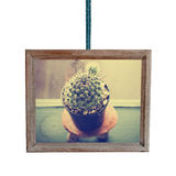 Wooden frame hanging on a rope with small cactus Royalty Free Stock Image