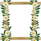 Wooden frame with leaves and daisies Royalty Free Stock Image