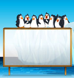 Wooden frame with penguins on ice Royalty Free Stock Photography