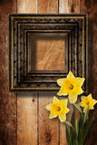 Wooden frame for photo with bunch of flower narcissus Stock Photos