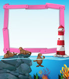 Wooden frame with seals underwater Stock Images