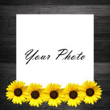 Wooden  frame with sunflowers Royalty Free Stock Images