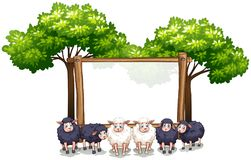 Wooden frame template with sheeps. Illustration Royalty Free Stock Photo