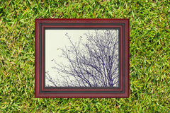 Wooden frame with view of dry branch of af tree, on green grass Royalty Free Stock Photography