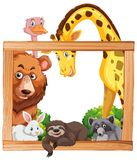 Wooden frame with wild animals Stock Image