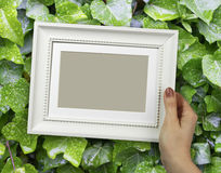 Wooden frame in woman hands on the background of green foliage Royalty Free Stock Photos