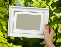 Wooden frame in woman hands on the background of green foliage Stock Photography