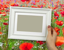 Wooden frame in woman hands on the background poppy field Royalty Free Stock Photography