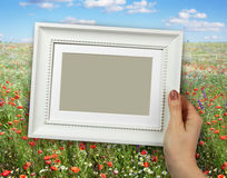Wooden frame in woman hands on the background of summer landscape with poppies flowers Stock Photography