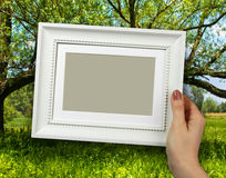 Wooden frame in woman hands on the forest background Royalty Free Stock Image