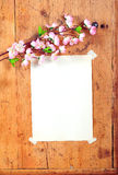 Wooden frames Spring Stock Images