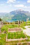 Wooden garden beds for growing herbs and vegetables with a view of mountains and lake. Wooden garden beds for growing herbs and vegetables high in Apls with a Stock Image