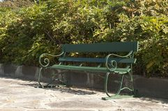 Wooden garden bench in front of a hedge royalty free stock photos