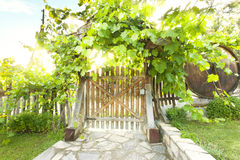 Wooden gate and fence in vines with morning light Stock Photography