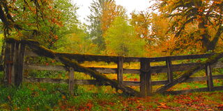 Wooden gate in forest. Wooden gate in autumn forest Royalty Free Stock Photography