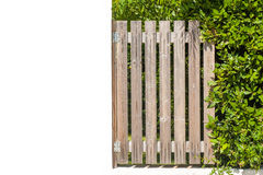 Wooden gate and green plant near wall Royalty Free Stock Photography
