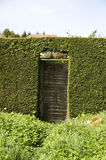 Wooden gate in hedge. Close up of wooden gate in green garden hedgerow, summer scene Royalty Free Stock Photo