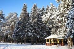 Wooden gazebo in forest in winter sunny day Stock Photo