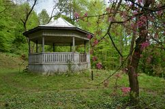 Wooden gazebo in the forest. Wooden resting pavilion standing in the forest. Springtime season with trees in blossom stock photography