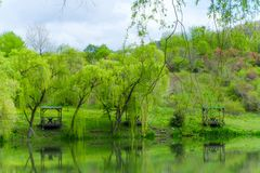 Gazebos and weeping willows on the lakeshore in  a clear sunny day and their reflection in the lake. Wooden gazebos and weeping willows on the lakeshore in  a royalty free stock image