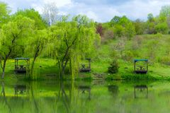 Gazebos and weeping willows on the lakeshore in  a clear sunny day and their reflection in the lake. Wooden gazebos and weeping willows on the lakeshore in  a royalty free stock images