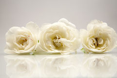 Wooden geometrical pieces with white roses Royalty Free Stock Photography