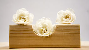 Wooden geometrical pieces with white roses Stock Photos