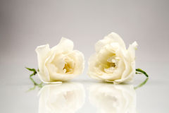Wooden geometrical pieces with white roses Royalty Free Stock Images