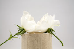 Wooden geometrical pieces with white roses Stock Photography