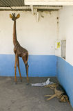 Wooden Giraffe looks over sleeping dog on the way to the Great Rift Valley, Kenya, Africa Stock Photo