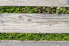 Wooden with green grass. Background Stock Photo