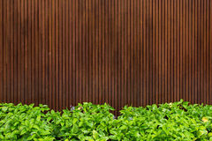 Wooden with green leaf Royalty Free Stock Photos